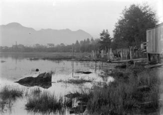 Black and White image picturing view of False Creek in 1904. A mountain in the background, and a shoreline of the salt marsh that used to exist here. Trees and marsh plants line the shore. From the City of Vancouver Archives